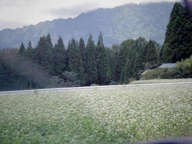 9月12日 娘夫婦に連れられて戸隠の蕎麦畑を見学する。_d0034980_21413037.jpg
