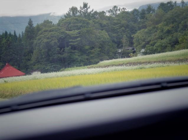 9月12日 娘夫婦に連れられて戸隠の蕎麦畑を見学する。_d0034980_21444859.jpg