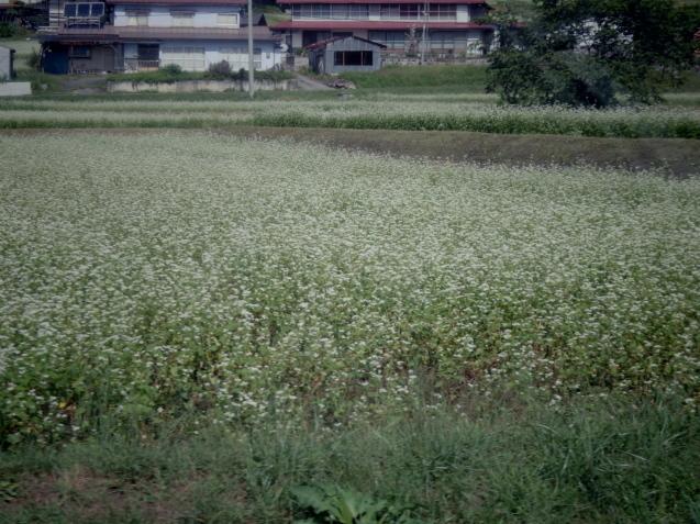 9月12日 娘夫婦に連れられて戸隠の蕎麦畑を見学する。_d0034980_21470297.jpg