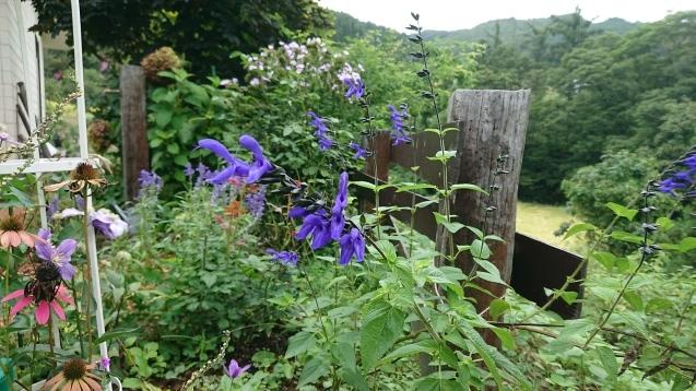 寂しい庭と種まき_c0320302_12345024.jpg