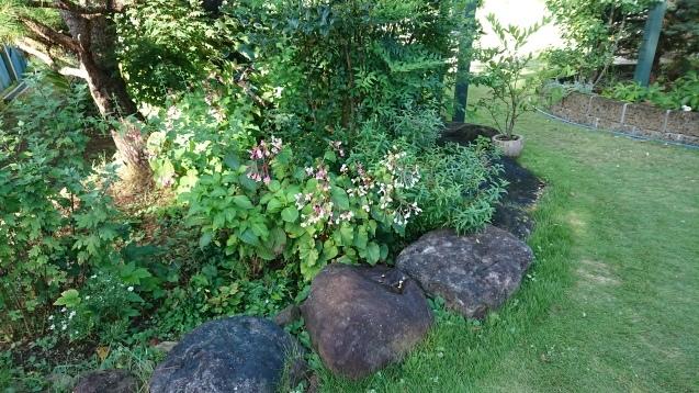 寂しい庭と種まき_c0320302_12355921.jpg