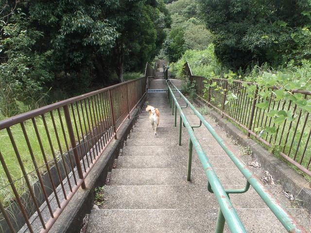 長い階段コース_e0371017_22524245.jpg