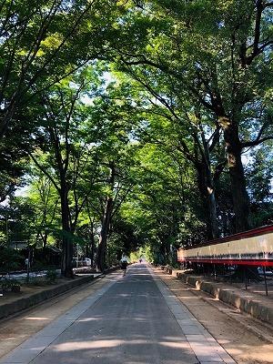 武蔵一宮 氷川神社と氷川だんご(^^)_e0152329_17203451.jpg