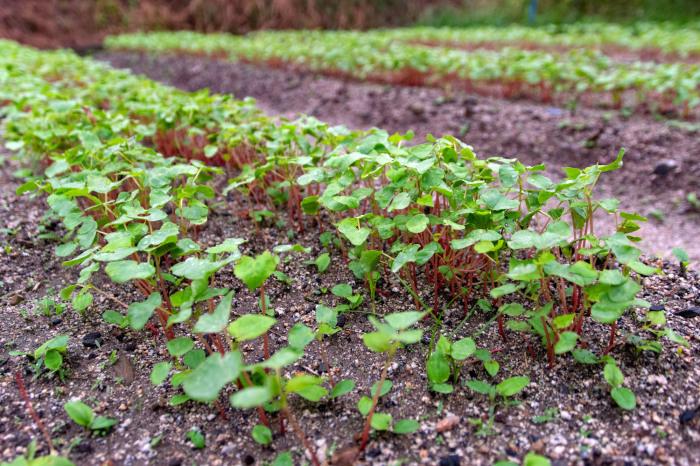 そばの芽サラダ週間。_b0340837_09521669.jpg
