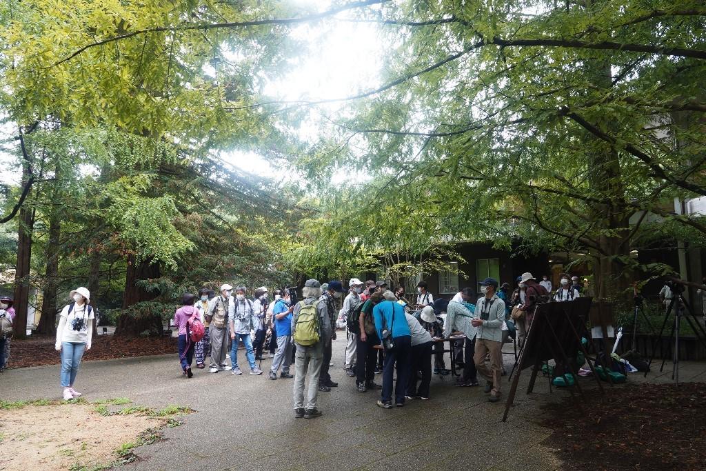 野鳥トレ221 森林植物園野鳥探鳥会_b0227552_19390867.jpg