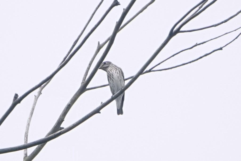 野鳥トレ221 森林植物園野鳥探鳥会_b0227552_19390929.jpg
