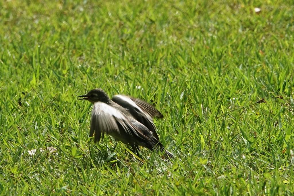 野鳥トレ221 森林植物園野鳥探鳥会_b0227552_19533683.jpg