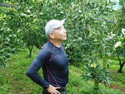 究極の柑橘「せとか」 摘果作業と玉吊り作業 樹勢も良く来年活躍する新芽も元気に芽吹いてます!_a0254656_18252193.jpg