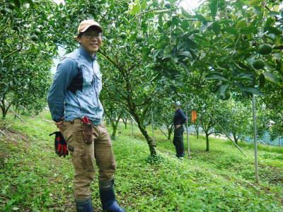 究極の柑橘「せとか」 摘果作業と玉吊り作業 樹勢も良く来年活躍する新芽も元気に芽吹いてます!_a0254656_18291762.jpg