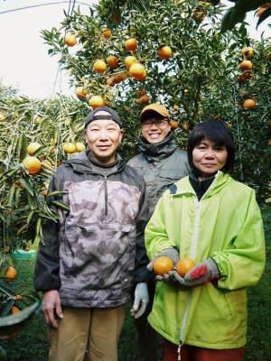 究極の柑橘「せとか」 摘果作業と玉吊り作業 樹勢も良く来年活躍する新芽も元気に芽吹いてます!_a0254656_18321761.jpg