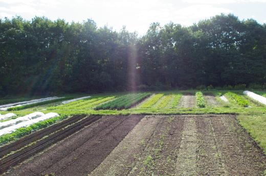 9月3週目の畑。_c0110869_11595950.jpg