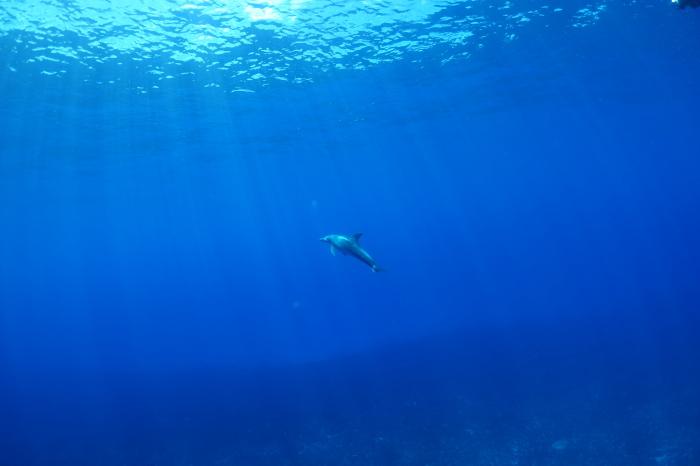 200913   南島周りで2DV! ドルフィンスイムにマッコウクジラウォッチングも(^^)/_a0335173_18180821.jpg