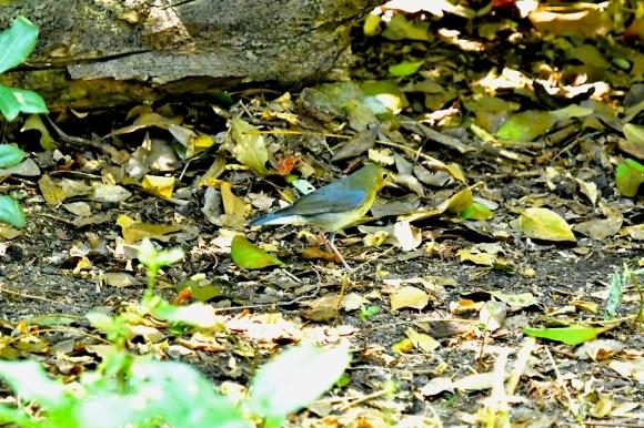 暑い公園で鳥さん撮影  大阪城公園_c0164881_15374228.jpg