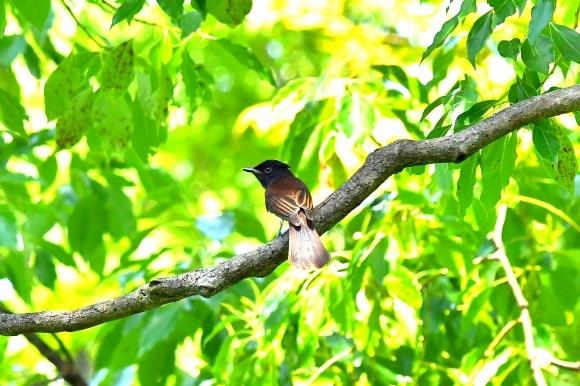 暑い公園で鳥さん撮影  大阪城公園_c0164881_15385488.jpg