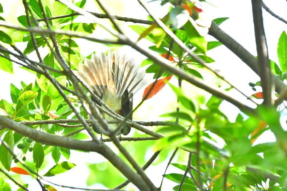暑い公園で鳥さん撮影  大阪城公園_c0164881_15391853.jpg