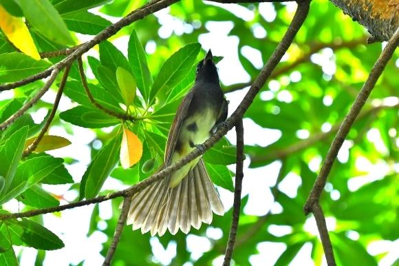 暑い公園で鳥さん撮影  大阪城公園_c0164881_15403439.jpg