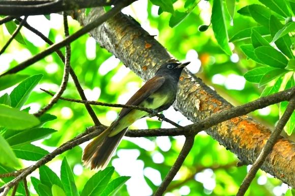 暑い公園で鳥さん撮影  大阪城公園_c0164881_15405036.jpg