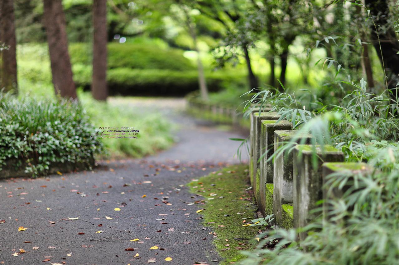 まゝに/9月の散策 武蔵丘陵森林公園 コリウス他_d0342426_00114666.jpg