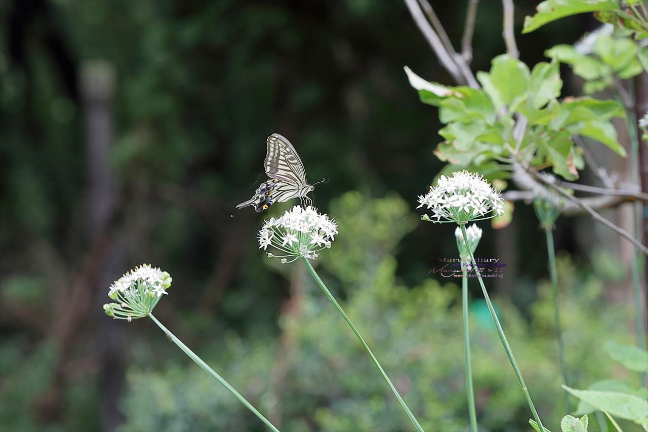 まゝに/9月の散策 武蔵丘陵森林公園 コリウス他_d0342426_00140440.jpg