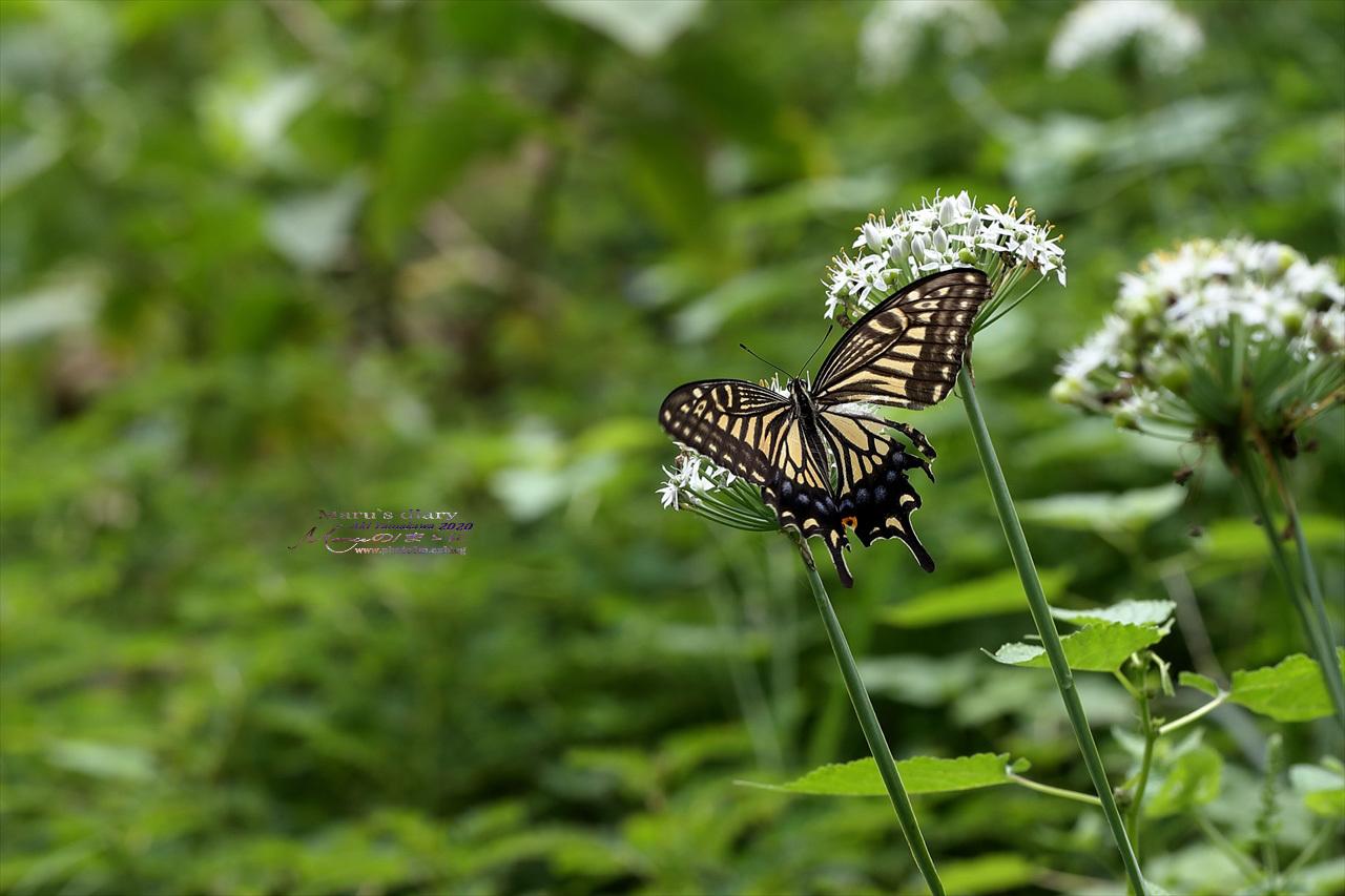 まゝに/9月の散策 武蔵丘陵森林公園 コリウス他_d0342426_00140474.jpg