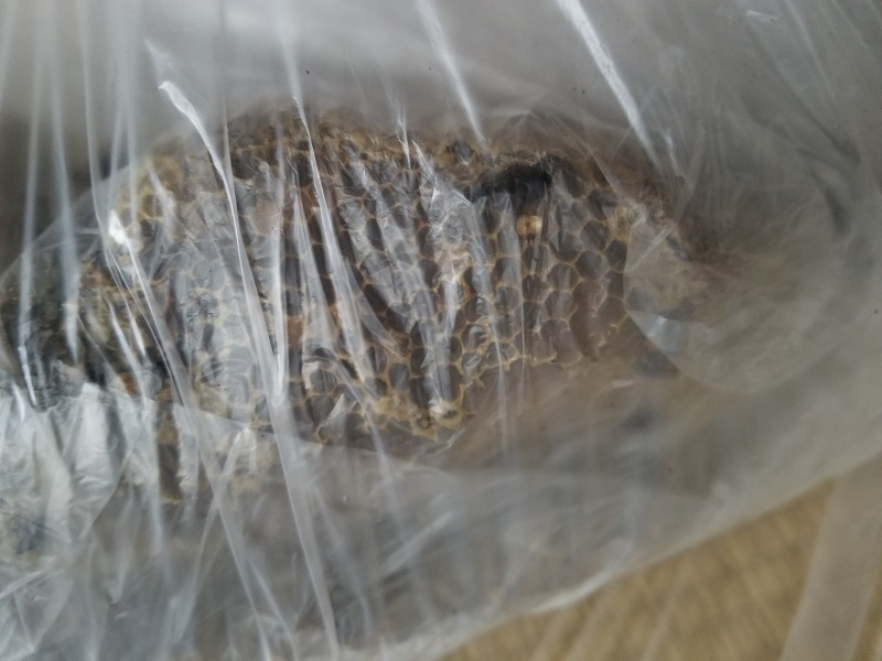 ハチの巣駆除_e0341430_16324406.jpg