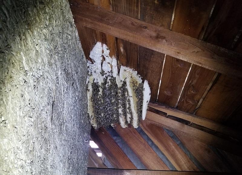 ハチの巣駆除_e0341430_16325355.jpg