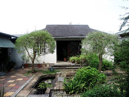 中庭のオリーブの木がゾウムシの被害に遭った_d0130640_21143476.jpg