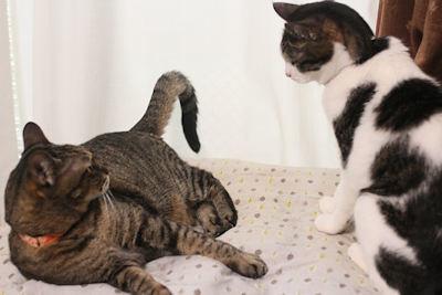 猫エコバッグ_d0034352_20270210.jpg