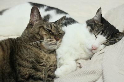 猫エコバッグ_d0034352_20270256.jpg