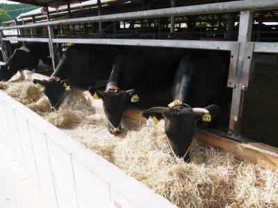 熊本県産の黒毛和牛を100%のハンバーグステーキ!次回出荷日決定!9月23日(水)に数量限定で出荷です!_a0254656_18242401.jpg