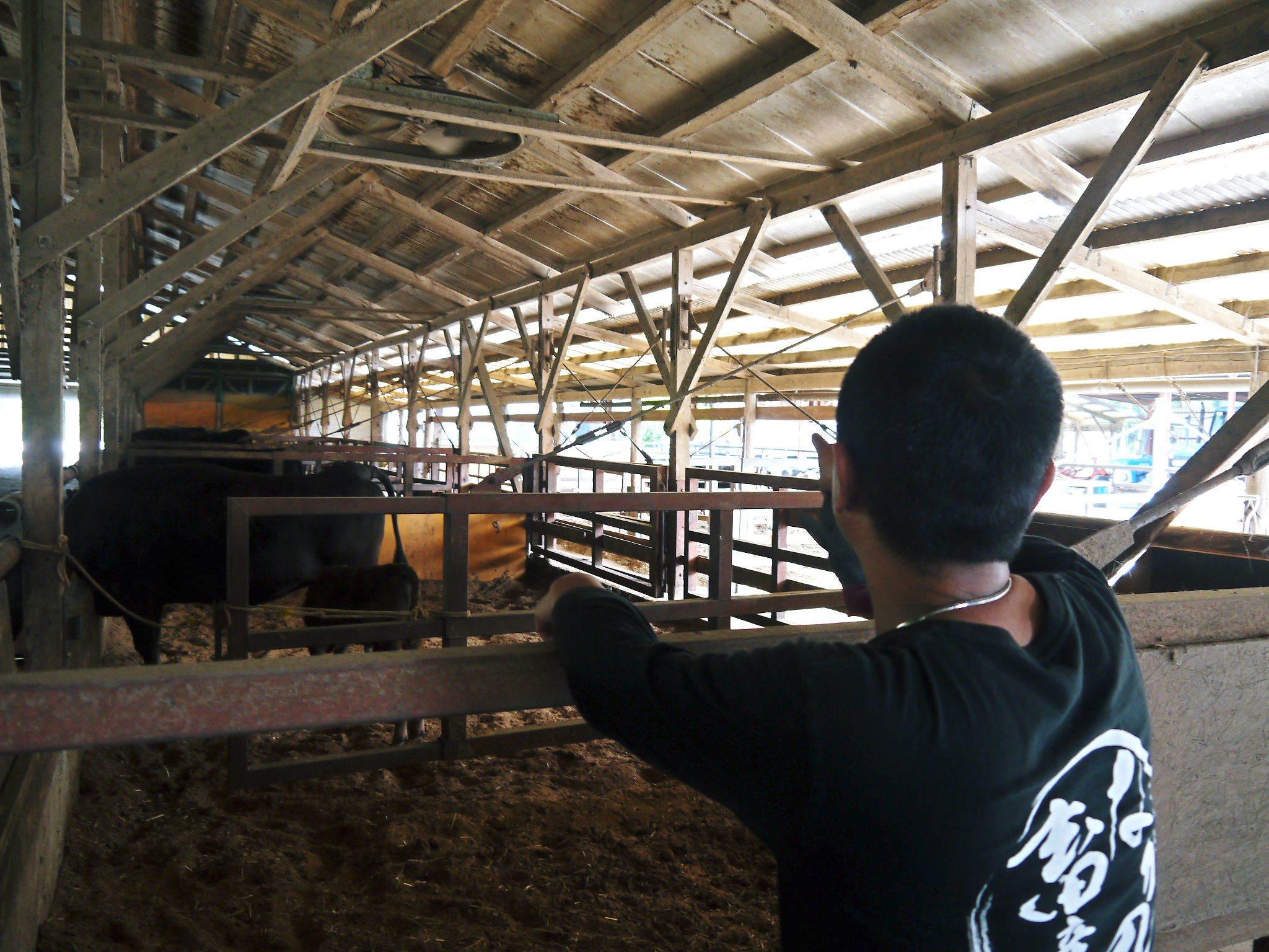 熊本県産の黒毛和牛を100%のハンバーグステーキ!次回出荷日決定!9月23日(水)に数量限定で出荷です!_a0254656_18265944.jpg