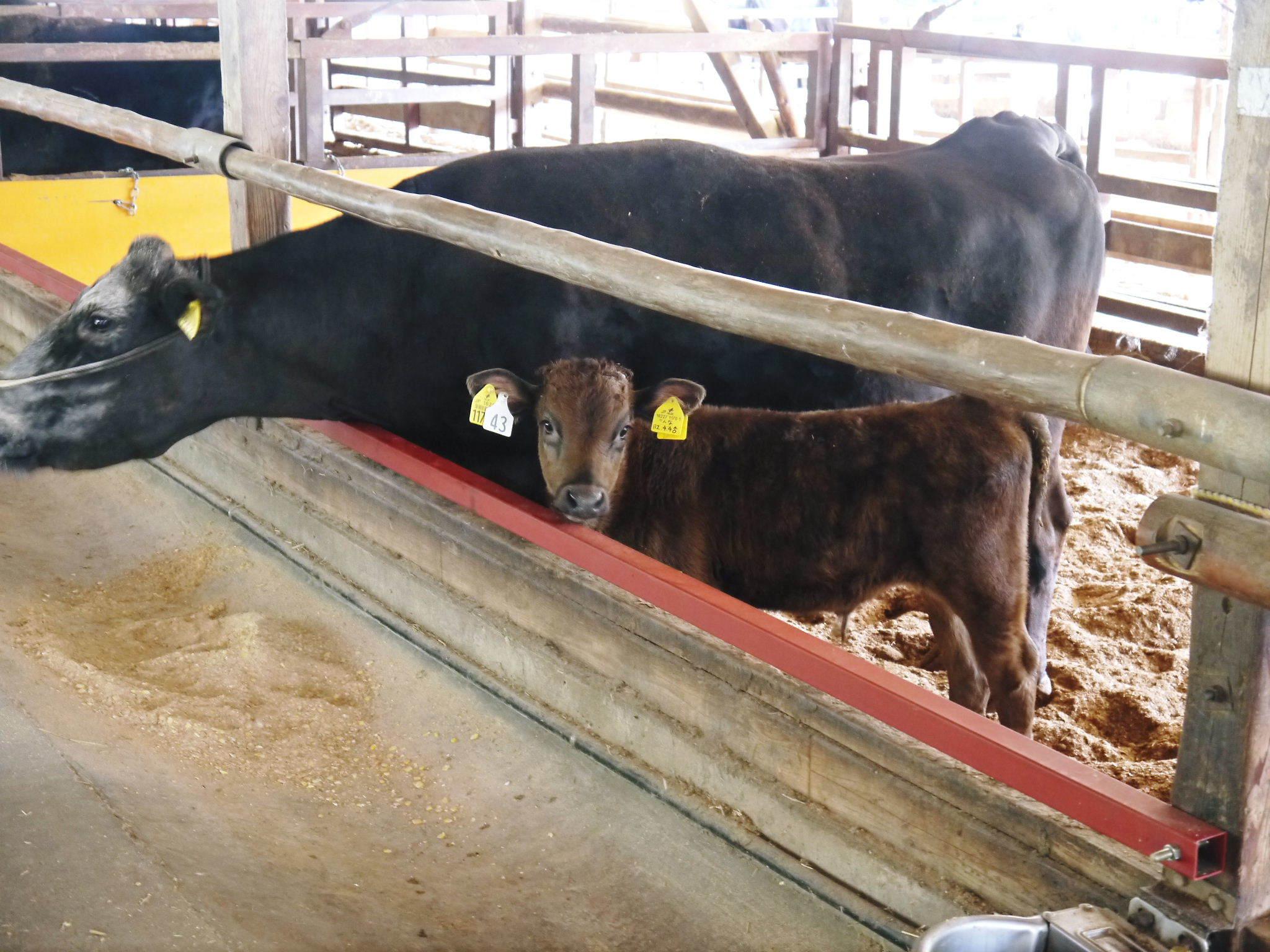 熊本県産の黒毛和牛を100%のハンバーグステーキ!次回出荷日決定!9月23日(水)に数量限定で出荷です!_a0254656_18434701.jpg