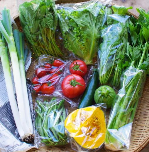 今週の野菜セット(9/15~9/19着)_c0110869_12195200.jpg