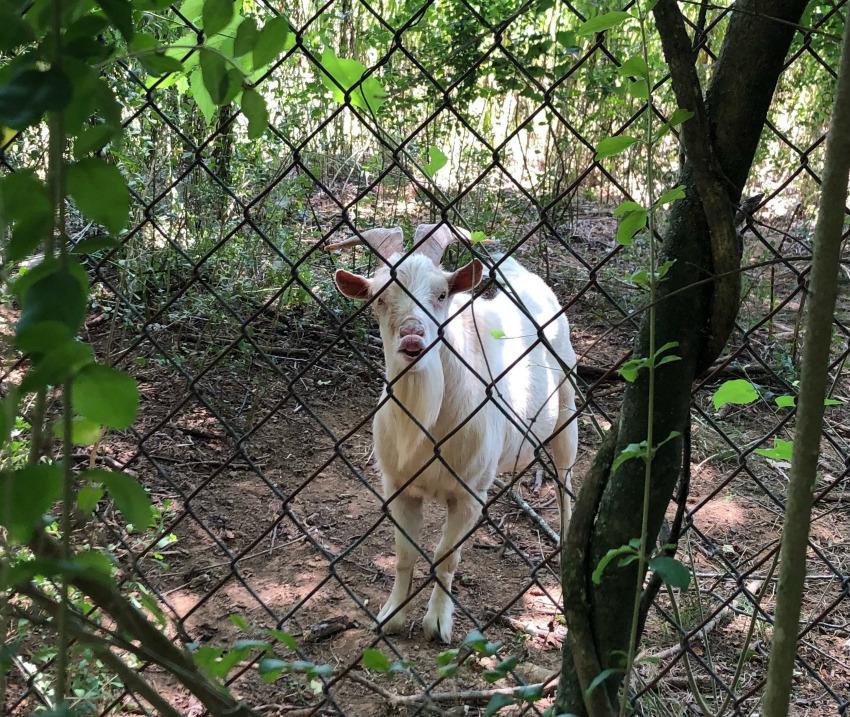 巨大化ピレネー犬【真夏の変化】_e0034987_17271960.jpg