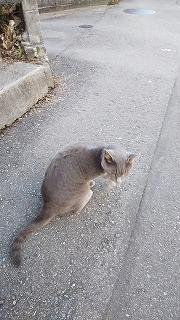 お団子と猫が好きな娘_a0284408_21221273.jpg