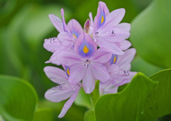 美しき湿原にミサゴがやって来た Ⅱ_d0290240_13490863.jpg