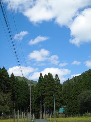 秋日和・・・キノコと秋空_d0005250_19533491.jpg