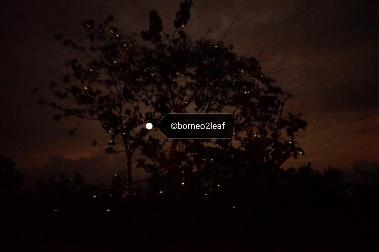 コタキナバルの夜_a0132757_18423812.jpg