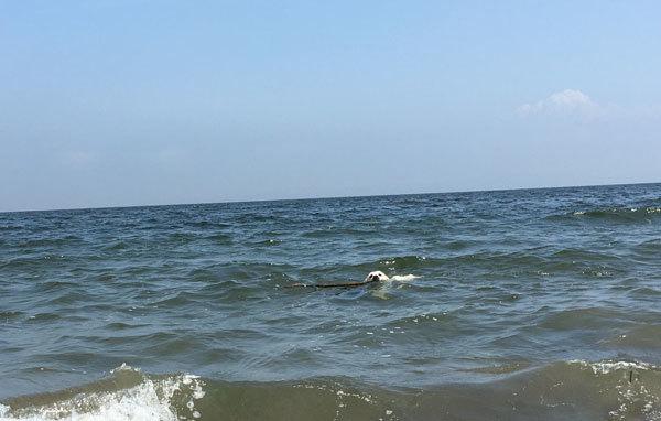 海へ♩〜_c0110361_14564932.jpg