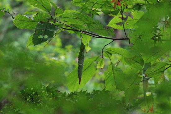 森の餃子_e0167571_23465334.jpg