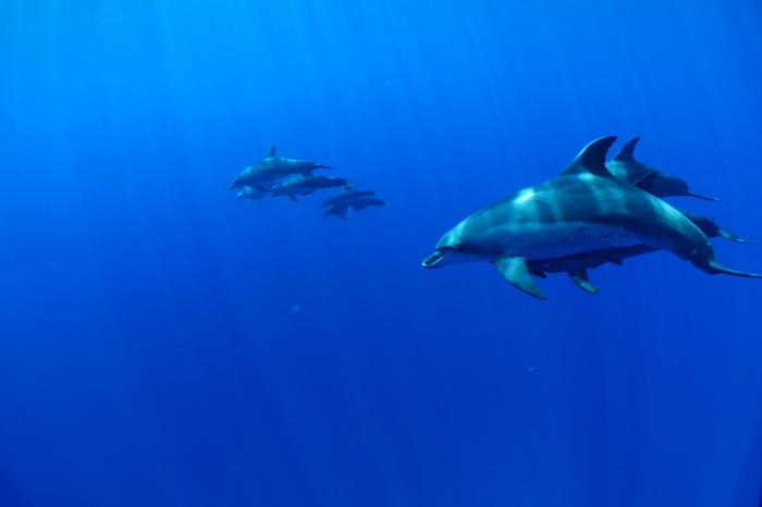 200915  嫁島遠征!  水の青さと魚影良し(^^)/_a0335173_18111372.jpg