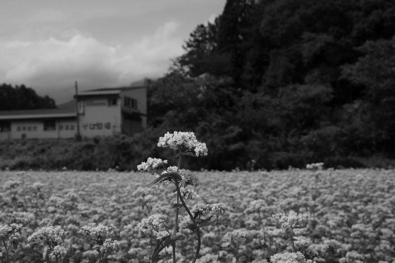 花盛り_b0150077_21593222.jpg