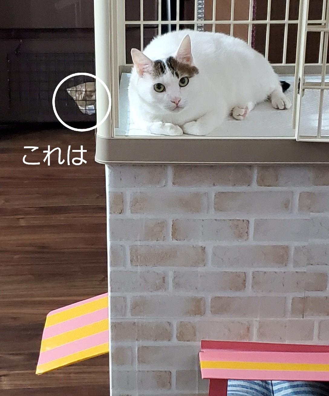 まるおちゃん_e0338831_19242210.jpg