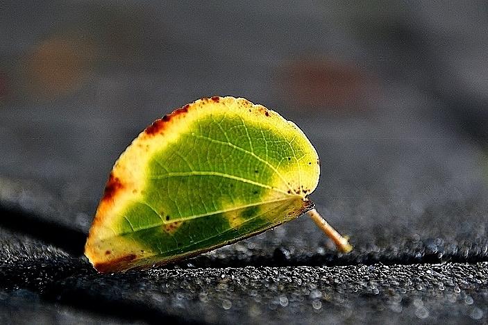 秋なんだなぁ_b0314043_07594367.jpg