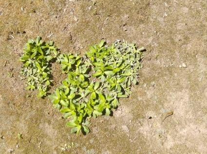 庭と花とほほえみと…_b0368362_05364710.jpg