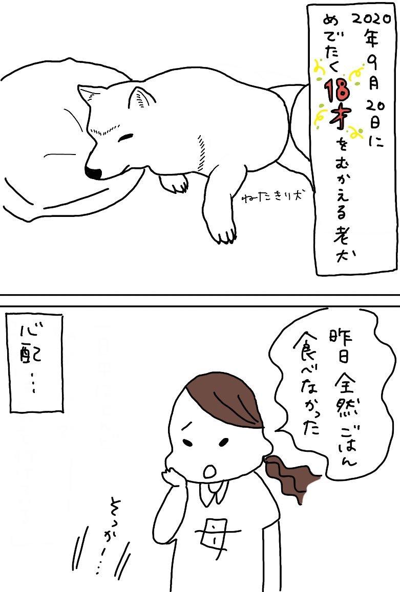 老犬のご飯の話_e0413199_00261266.jpg