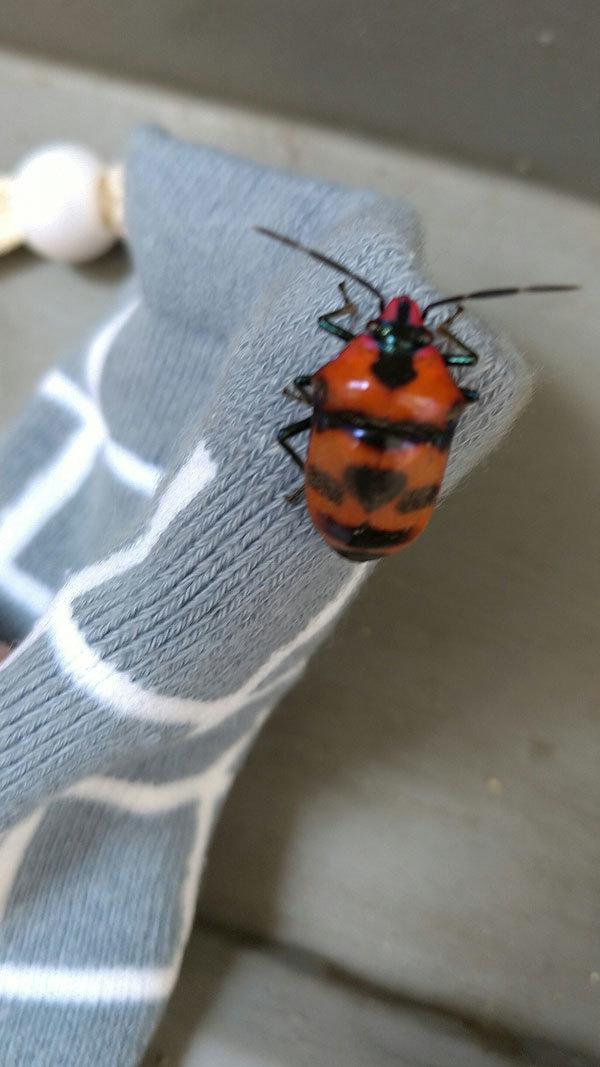 非常階段の側溝に美しい虫がひっくり返っていました_b0025008_11510157.jpg
