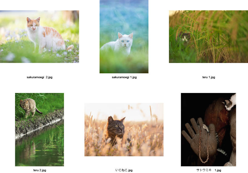 池袋「ギャラリー路草」にて2タイトルの猫写真展を開催します。_c0194541_01052483.jpg
