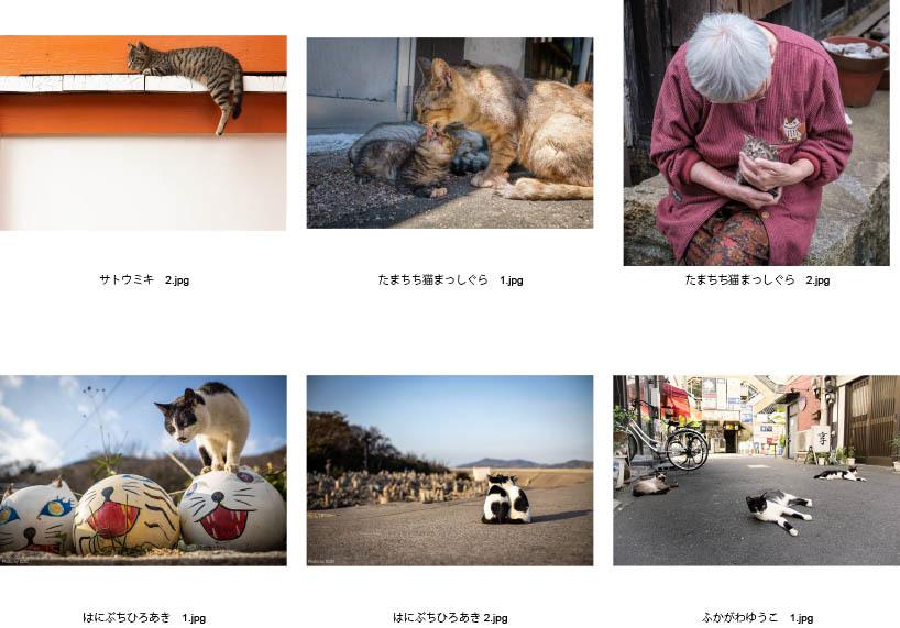 池袋「ギャラリー路草」にて2タイトルの猫写真展を開催します。_c0194541_01053668.jpg