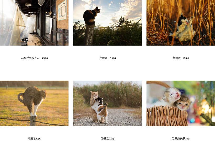 池袋「ギャラリー路草」にて2タイトルの猫写真展を開催します。_c0194541_01055135.jpg
